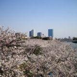 OBPと桜