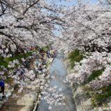 奈良県大和高田市の桜の名所「高田千本桜」が満開で美しかった!