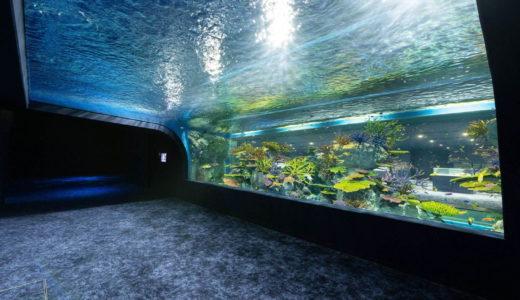 「DMMかりゆし水族館」がイーアス沖縄豊崎内にオープン、リアルとバーチャルが融合したエンタメ水族館